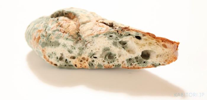 青カビの生えたパン
