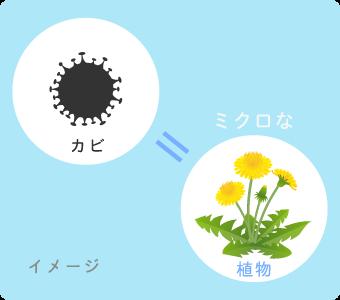 カビはミクロな植物