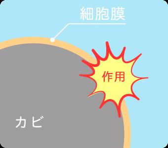 細胞膜へダメージ